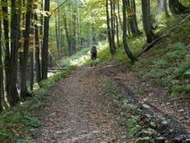 Val upp av avfall i skogen Royaltyfri Bild