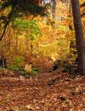 Val van de bladeren Royalty-vrije Stock Afbeeldingen