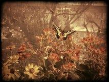 Val van Vlinders stock afbeeldingen