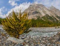 Val Veny, Italie - les montagnes et le fleuve III images stock