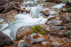 Val Veny, Italy - Alpine Stream II Royalty Free Stock Images