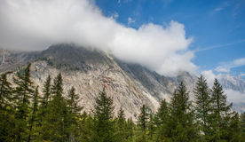 Val Veny, Italy - Forest Tops and Italian Alps Royalty Free Stock Photos