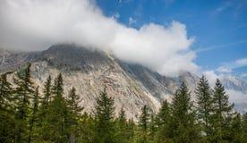 Val Veny, Italy - Forest Tops and Italian Alps Royalty Free Stock Photos