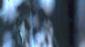 Val, zeldzame vrees, angstaanjagend, Royalty-vrije Stock Foto