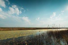 Vala, volgermeerpolder holandês da paisagem imagem de stock royalty free