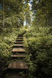 Valaam Island, Ladoga. Island Valaam. Staircase from large wooden steps up the hill Royalty Free Stock Images
