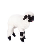 Valais lamb On White Royalty Free Stock Images