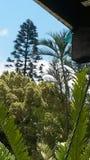 Valanga degli alberi Immagine Stock