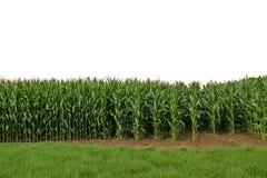 Valanga del cereale Fotografia Stock Libera da Diritti