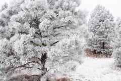 Valanga di inverno fotografia stock