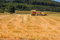 VALCHOV, CZECH REPUBLIC - JUNE 29: Combines harvesting grains and filling tractor trailer in summer on field June 29, 2017 in Valc. Combines harvesting grains Stock Image