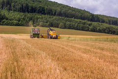 VALCHOV, CZECH REPUBLIC - JUNE 29: Combines harvesting grains and filling tractor trailer in summer on field June 29, 2017 in Valc. Combines harvesting grains Royalty Free Stock Photography