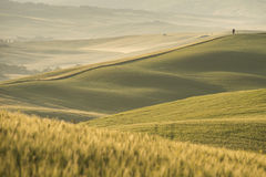 VAld'orcia, Toscanië Stock Afbeelding