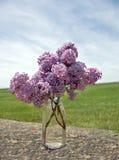 valda nya lilor för flaska Arkivbilder