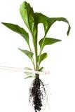 valda pinnar planterar upp royaltyfri foto