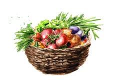 Valde nytt grönsaker i korg Dragen illustration för vattenfärg som hand isoleras på vit bakgrund stock illustrationer