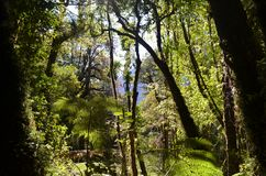 Ecoregion of the Valdivian temperate rainforests in southern Chile Chilean Patagonia. The Valdivian temperate forest is an ecoregion on the west coast of Royalty Free Stock Image