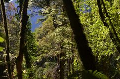 Ecoregion of the Valdivian temperate rainforests in southern Chile Chilean Patagonia. The Valdivian temperate forest is an ecoregion on the west coast of royalty free stock photo