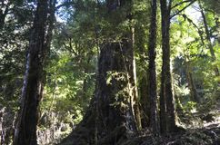 Ecoregion of the Valdivian temperate rainforests in southern Chile Chilean Patagonia. The Valdivian temperate forest is an ecoregion on the west coast of stock photos