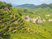 Valdobbiadene hills and vineyards, land of Prosecco. Sunny view of the vineyards on Valdobbiadene hills, harvest of grapes for Prosecco sparkling wine stock images