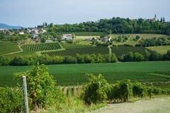 Valdobbiadenewijngaarden, Veneto, Italië Stock Afbeeldingen