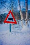 Valdres Norge - mars 26, 2018: Utomhus- sikt av tecknet av tjurar som korsar på en sida under vinter i vägen, med royaltyfria foton