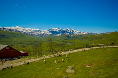 VALDRES, NORWAY - 6 JULY, 2015: Stunning nature on Royalty Free Stock Photography