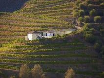 Vale 3 do vinho portuário fotos de stock