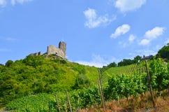 Vale Alemanha de Moselle: A vista aos vinhedos e as ruínas de Landshut fortificam perto de Bernkastel-Kues Fotos de Stock