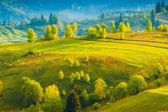 Vale amarelo Carpathian imagem de stock royalty free