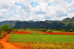Vale bonito de Vinales, Cuba Imagens de Stock Royalty Free