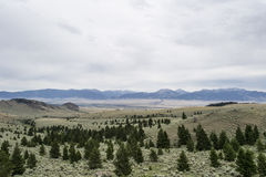Vale com pinheiros e montanhas Imagens de Stock Royalty Free