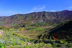 Vale da paisagem palmar Tenerife do EL fotos de stock