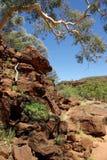 Vale da palma, Austrália imagem de stock royalty free