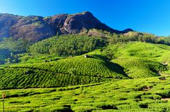 Vale da plantação de chá em Munnar Foto de Stock Royalty Free