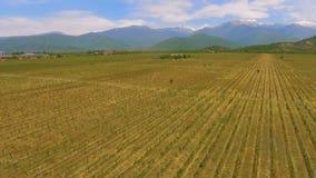 Vale de Alazani em Geórgia, em negócio do vinho e em exportação, variedade da uva, vista aérea video estoque