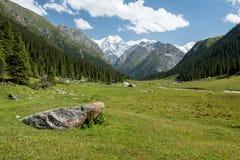 Vale de Altyn Arashan em Quirguizistão Montanhas de Tian Shan em Kirghizia, paisagem Fotografia de Stock Royalty Free