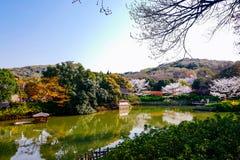 Vale de Cherry Blossom, wuxi, porcelana Fotografia de Stock Royalty Free
