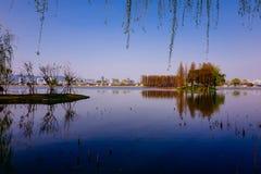 Vale de Cherry Blossom, wuxi, porcelana Foto de Stock Royalty Free