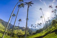 Vale de Cocora com as palmas de cera gigantes perto de Salento, Colômbia fotografia de stock