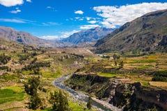 Vale de Colca, Peru Fotos de Stock
