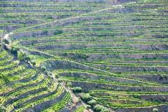 Vale de Douro fotografia de stock royalty free