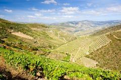 Vale de Douro fotos de stock royalty free