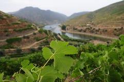 Vale de Douro Foto de Stock Royalty Free