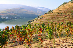 Vale de Douro Imagens de Stock Royalty Free