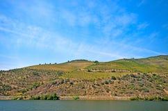 Vale de Douro: Beira-rio de Douro com os vinhedos perto de Pinhao, Portugal imagens de stock