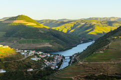 Vale de Douro do rio, Portugal foto de stock royalty free