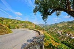 Vale de Douro: Vinhedos e vila pequena perto do peso a Dinamarca Regua, Portugal Fotos de Stock Royalty Free