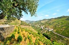 Vale de Douro: Vinhedos e vila pequena perto do peso a Dinamarca Regua, Portugal Fotografia de Stock