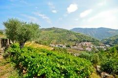 Vale de Douro: Vinhedos e vila pequena perto do peso a Dinamarca Regua, Portugal foto de stock